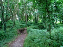 Picture of Woodland Pathway to Din Lligwy Hut Group