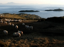 Picture of Anglesey Coastal Path at Rhoscolyn