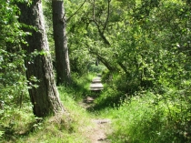 Picture of Forest Trails on Anglesey