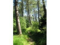 Picture of Newborough Forest Trails