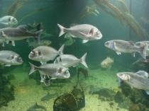 Picture of Silent World