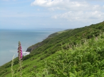 Picture of Cardigan Bay Coastal Path